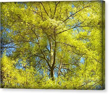 Spring Greening Canvas Print by Lorraine Heath