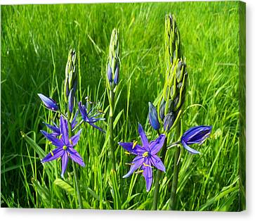Spring Greetings Canvas Print by Steve Battle