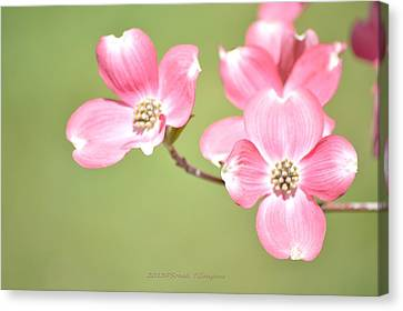 Spring Harbinger Canvas Print