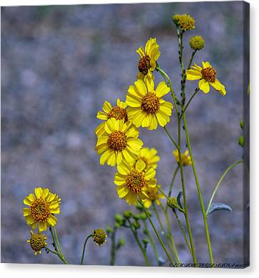 Canvas Print featuring the photograph Spring Has Sprung by Elaine Malott