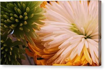 Canvas Print - Spring Has Sprung II by Anna Villarreal Garbis