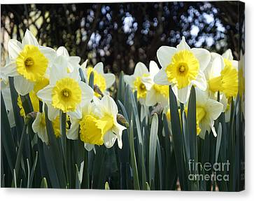 Canvas Print featuring the photograph Spring Has Sprung by Rafael Quirindongo