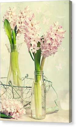 Spring Hyacinths Canvas Print by Amanda Elwell