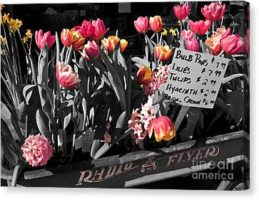 Spring In A Wagon Canvas Print by Sandi Mikuse