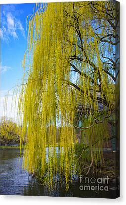 Canvas Print featuring the photograph Spring In Central Park Nyc by Rafael Quirindongo