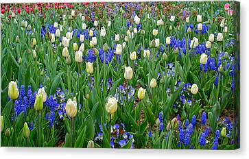 Spring In Giverny Canvas Print