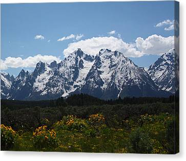 Spring In Grand Tetons National Park Canvas Print