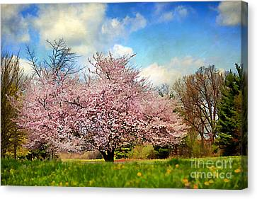 Spring In Kentucky Canvas Print by Darren Fisher