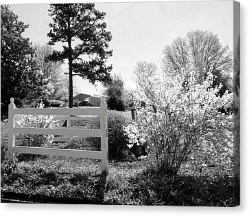 Spring In Martinsville Bw Canvas Print by Angelia Hodges Clay