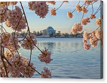 Spring In The Nation's Capital Canvas Print by Jared Perry