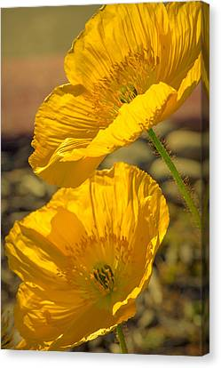 Spring In Yellow Canvas Print by Rima Biswas