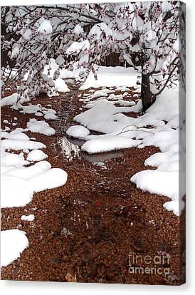 Canvas Print featuring the photograph Spring Into Winter by Kerri Mortenson