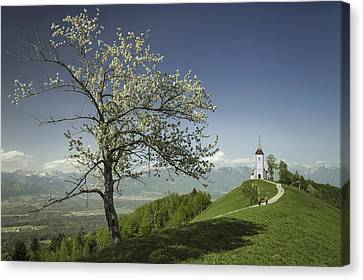 Spring Is Back Canvas Print