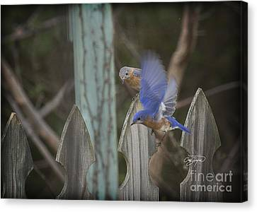 Spring Is Coming I Canvas Print by Cris Hayes