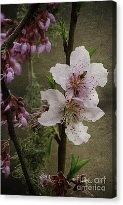Canvas Print featuring the photograph Spring Is Here by Lori Mellen-Pagliaro