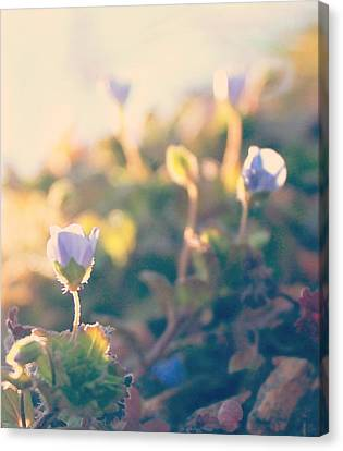 Canvas Print featuring the photograph Spring Light And Wildflowers by Candice Trimble