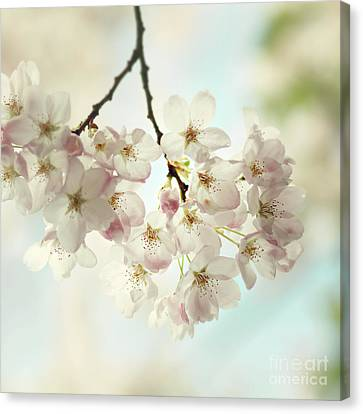 Canvas Print featuring the photograph Spring Light by Sylvia Cook