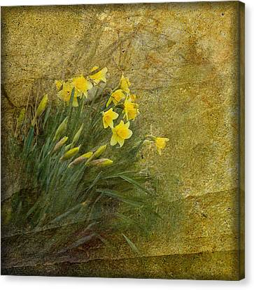 Spring Canvas Print by Liz  Alderdice