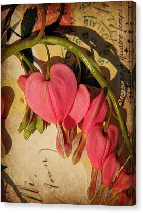 Spring Love Canvas Print by Chris Berry
