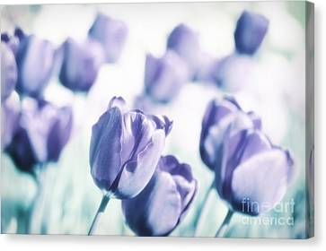 Spring Love II Canvas Print by Angela Doelling AD DESIGN Photo and PhotoArt