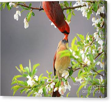 Cardinal Spring Love Canvas Print