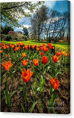 Spring Meadow Canvas Print by Adrian Evans