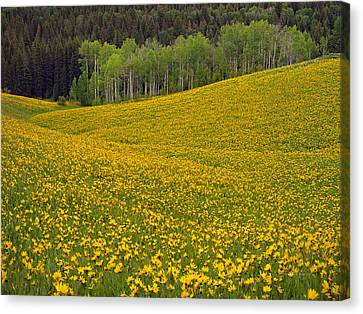 Majesty Canvas Print - Spring Meadow by Leland D Howard