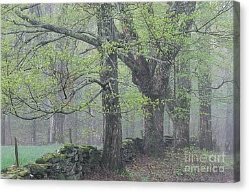 Spring Mist Canvas Print by Alan L Graham