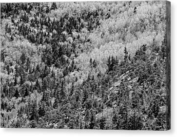 Spring On Cadillac Mountain Acadia National Park Black And White Canvas Print by Keith Webber Jr