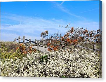 Spring On Cape Cod Canvas Print by Bill Wakeley