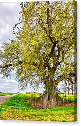 Spring On The Delta 2 Canvas Print