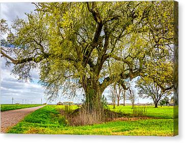 Grey Clouds Canvas Print - Spring On The Delta by Steve Harrington