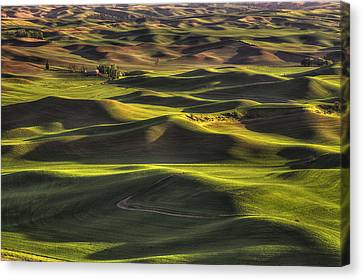 Spring On The Palouse Canvas Print by Mark Kiver