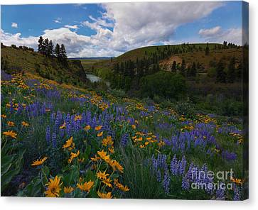 Spring On The Yakima Canvas Print by Mike  Dawson