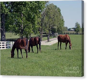 Spring Paddock Canvas Print by Roger Potts