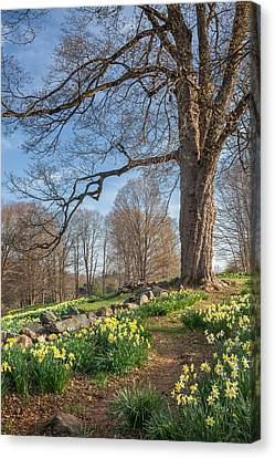 Spring Path Canvas Print by Bill Wakeley