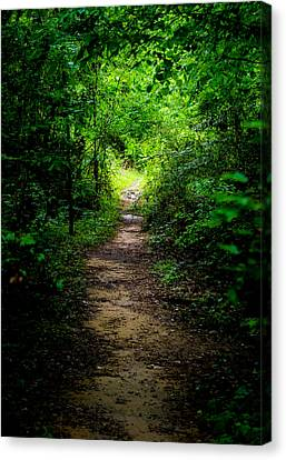 Spring Path To The Light Canvas Print by Shelby  Young