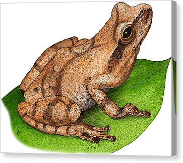 Spring Peeper Canvas Print by Roger Hall