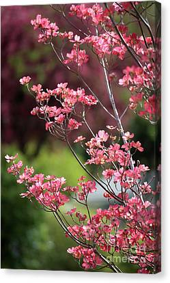 Spring Pink And Green Canvas Print