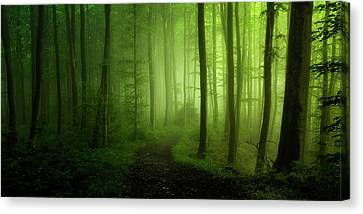 Magic Canvas Print - Spring Promise by Norbert Maier