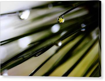 Spring Rain On The Pines Canvas Print