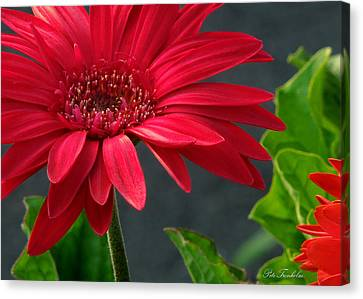 Spring Red Canvas Print