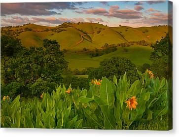 Spring Scene At Round Valley Canvas Print by Marc Crumpler