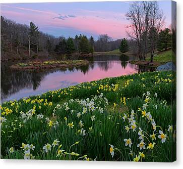 Spring Serenity Canvas Print by Bill Wakeley