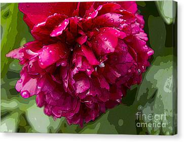 Spring Shower Peony 2 Canvas Print by Jeanette French