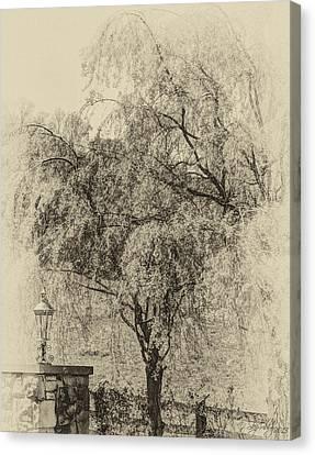 Spring Canvas Print by Skip Tribby