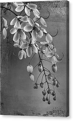 Spring Song Canvas Print by Chrystyne Novack