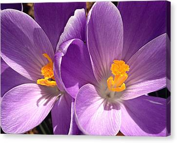 Spring Sprang Canvas Print by Gwyn Newcombe