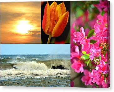 Spring Summer Collage Canvas Print by Sandi OReilly