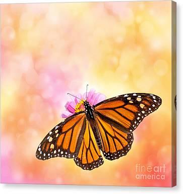 Spring Sunlight Canvas Print